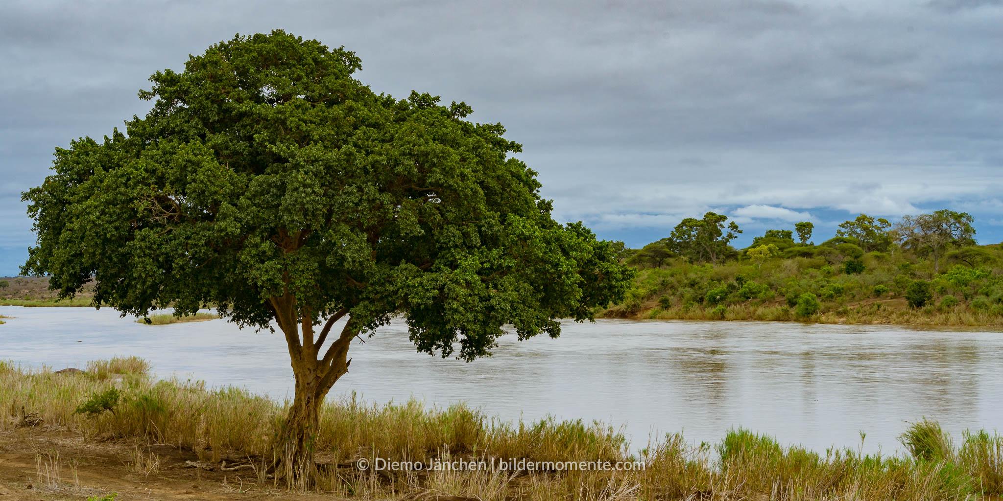 Ufer des Limpopo im Kruger National Park