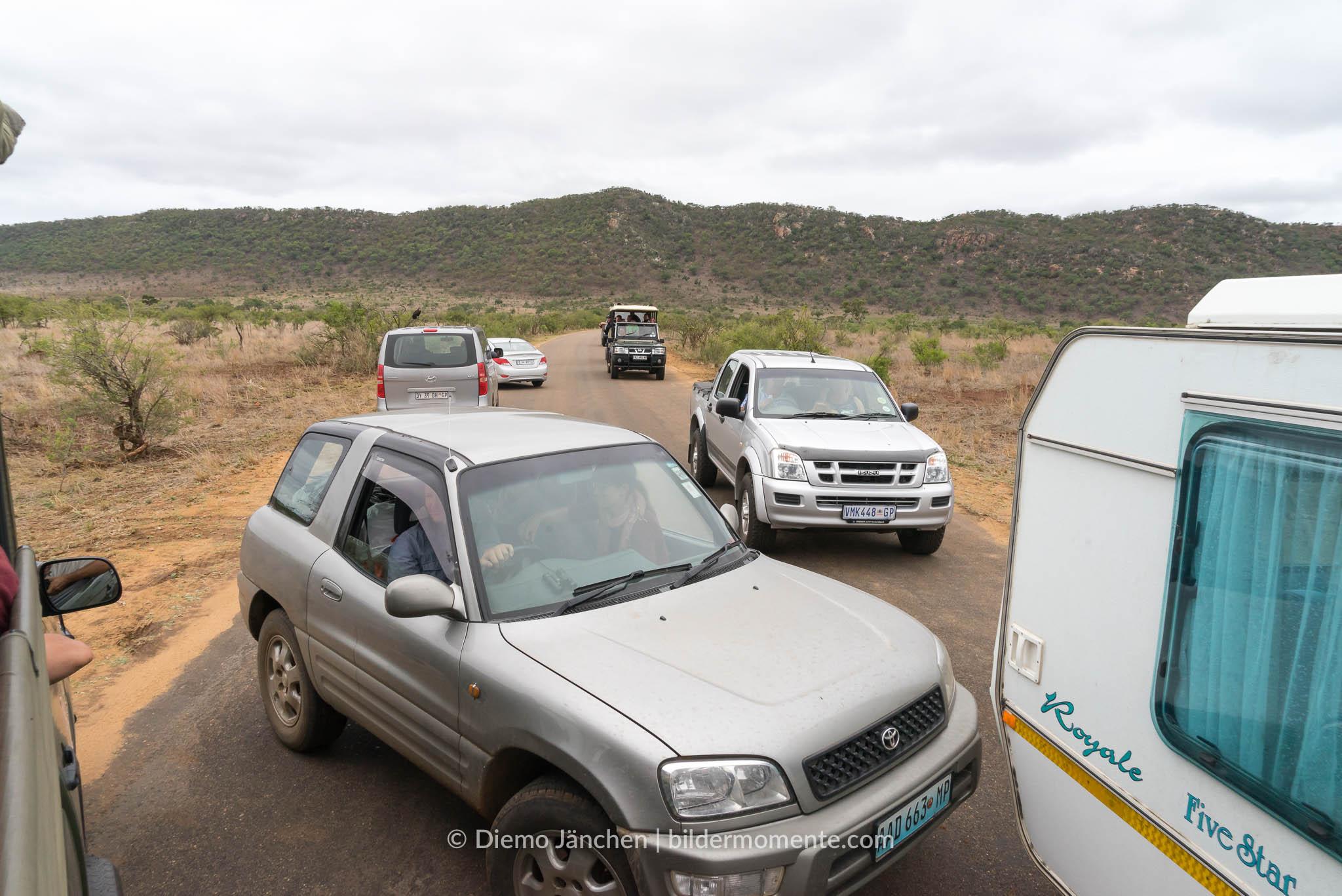 Stau im Kruger National Park - Grund: Löwen