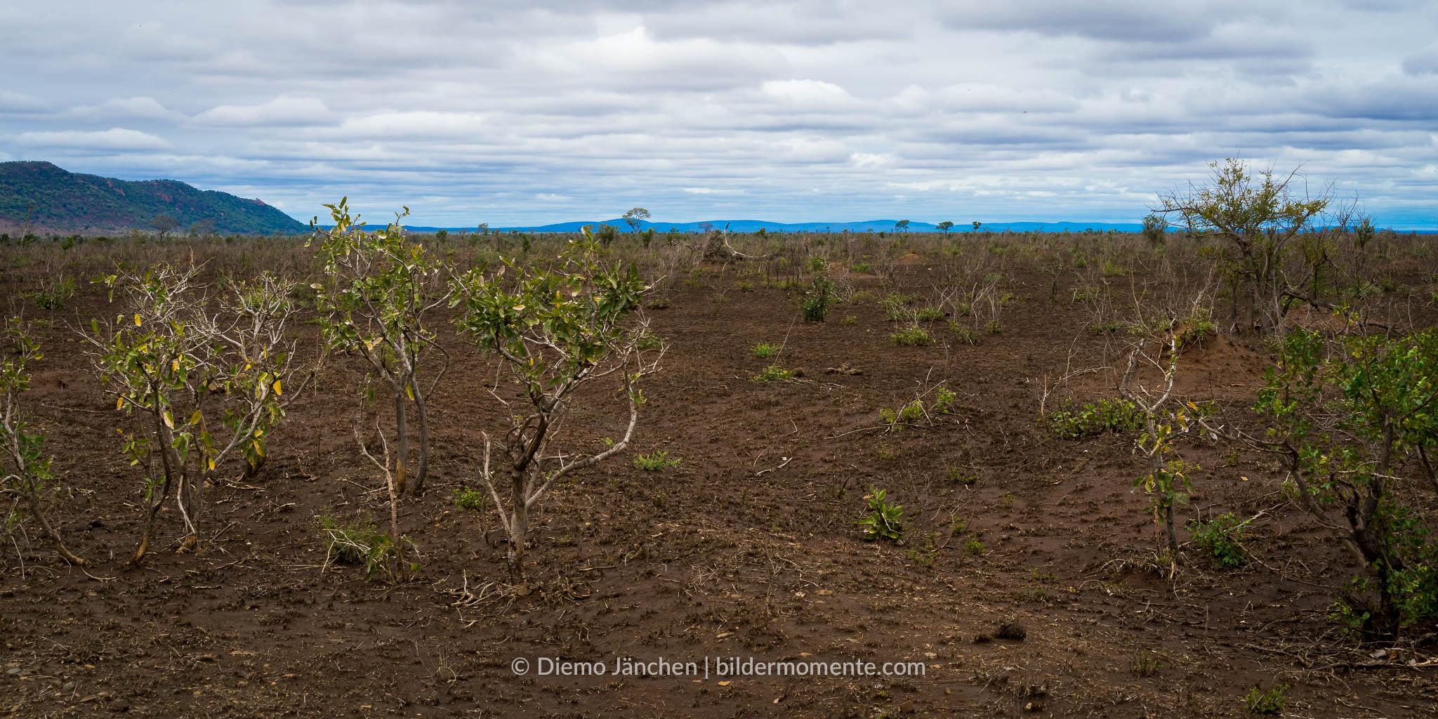Kruger Nationa Park die Auswirkungen der Dürre