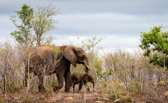 Kruger National Park - 10.03.2016