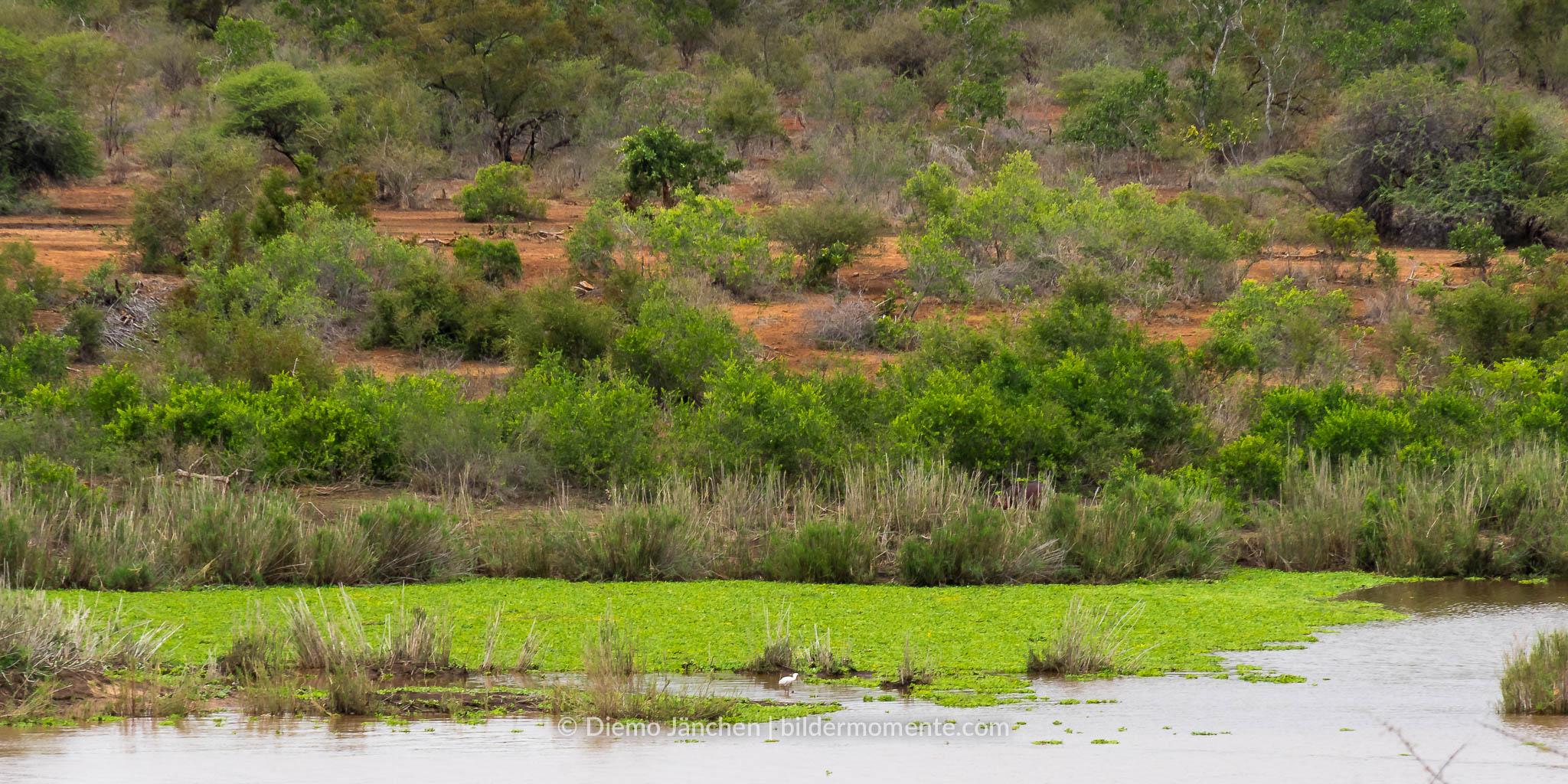Ufer des Limpopo im Kruger National Park mit Störchen