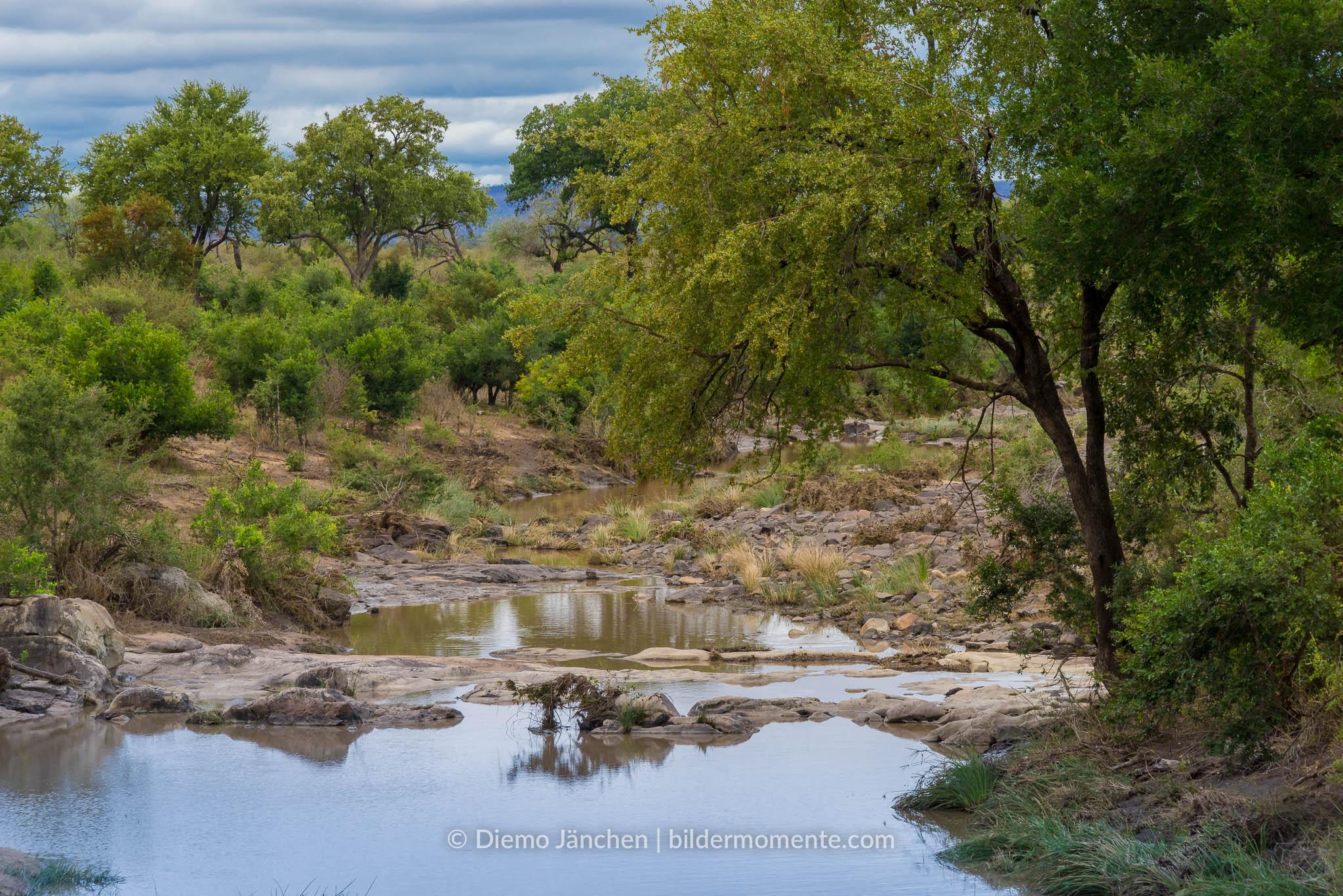 Wasserloch im Kruger National Park
